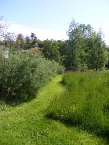 Gestion différenciée des espaces verts 4