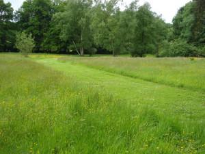 Gestion différenciée des espaces verts 2