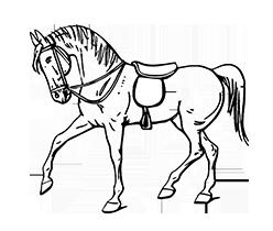 equitation_sejour