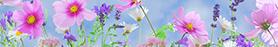 agenda_sofia_fleurs